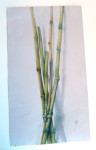 Bamboo by Phyllis Steele 13 x 22 Pencil on paper