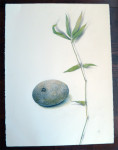 Big Rock and Bamboo by Phyllis Steele 22 x 30 Pencil on paper