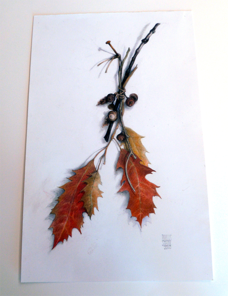 Fall - Four Seasons Series by Phyllis Steele 11 x 17 Pencil on paper