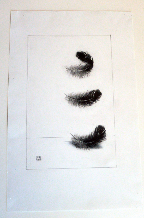 Falling Feathers by Phyllis Steele 11 x 17 Pencil on paper