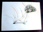 Sea Grass and Barnacle by Phyllis Steele 30 x 22 Pencil on paper