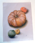 Squash by Phyllis Steele 17 x 22 Pencil on paper